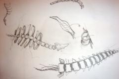 dibuixos-(10)