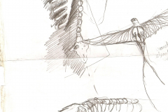 Dibuixos